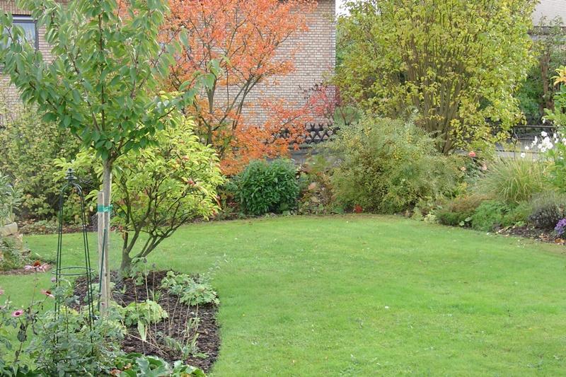 Mein schlenkerbeet im vorgarten seite 1 for Mein vorgarten