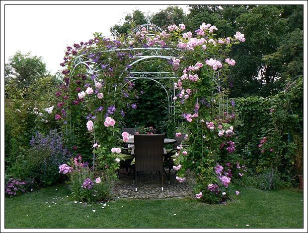 welche clematis f r meine rose falstaff mein sch ner garten forum. Black Bedroom Furniture Sets. Home Design Ideas
