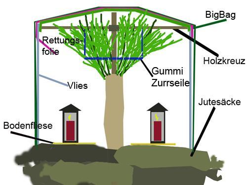 winterschutz zwischenbilanz winterschutz palmen exotenfans forum. Black Bedroom Furniture Sets. Home Design Ideas