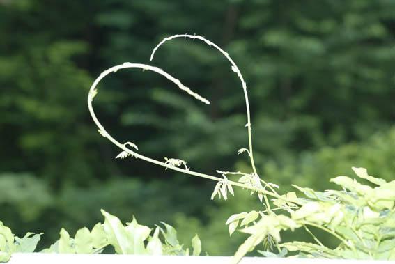 Ein Valentinstagsgruß Für Eure Herzen : )