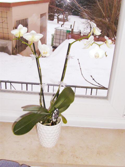 wie heissen diese orchideen mein sch ner garten forum. Black Bedroom Furniture Sets. Home Design Ideas