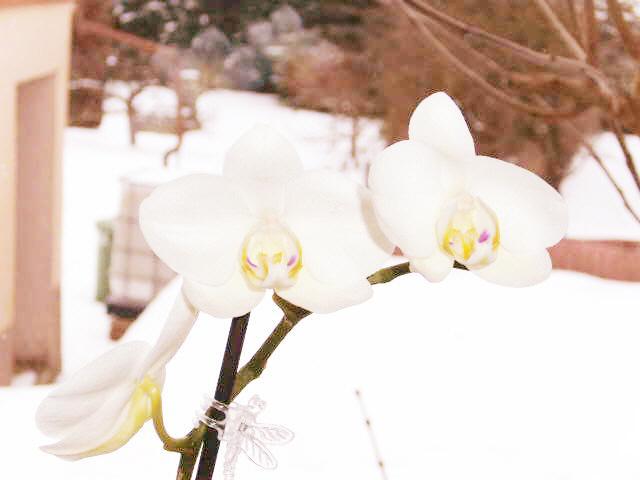 wie heissen diese orchideen seite 1 pflanzenfragen mein sch ner garten online. Black Bedroom Furniture Sets. Home Design Ideas