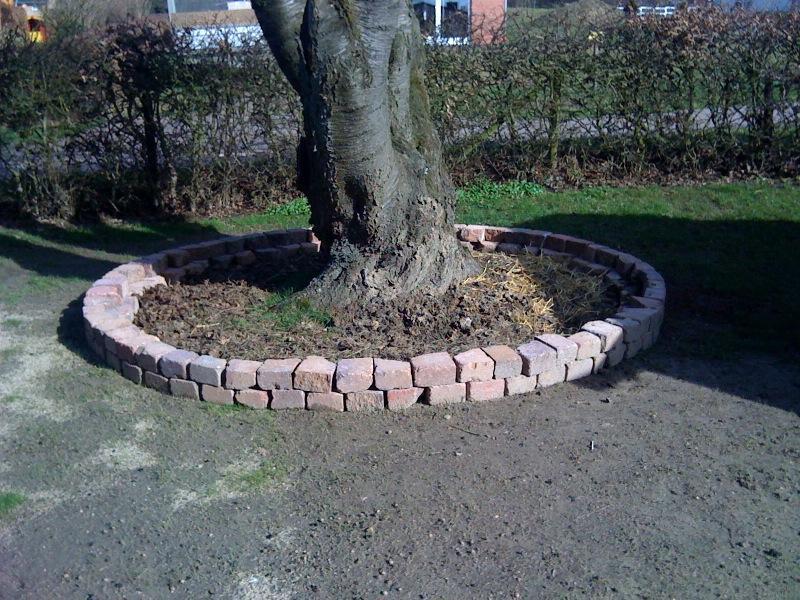 Bepflanzung eines steinkreises um einen kirschbaum seite for Gartengestaltung um einen baum
