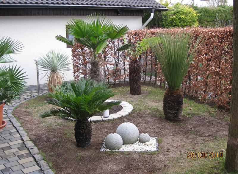 rasen richtig s en bambus gr ser teich und sumpfpflanzen exotenfans forum. Black Bedroom Furniture Sets. Home Design Ideas