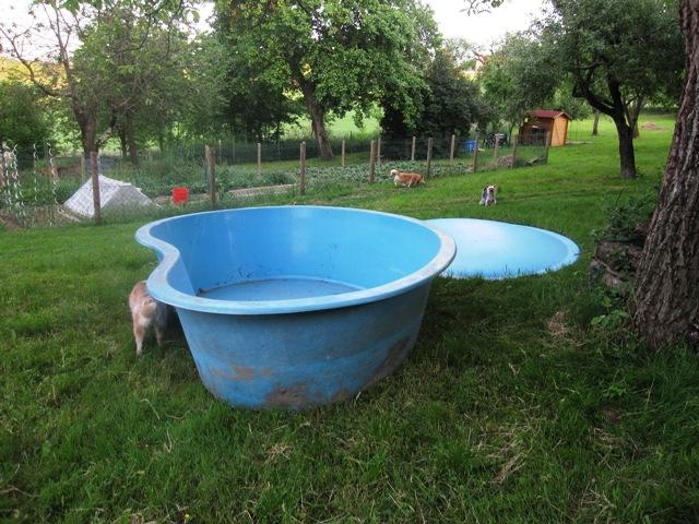 V hunde swimmingpool xxxl polyesterbecken for Swimmingpool aus plastik