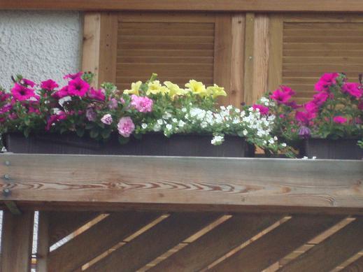 es ist vollbracht endlich mal keine geranien auf dem balkon mein sch ner garten forum. Black Bedroom Furniture Sets. Home Design Ideas