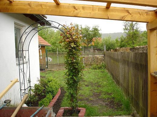 Minig rtchen 2010 page 38 mein sch ner garten forum for Gartengestaltung rosenbogen
