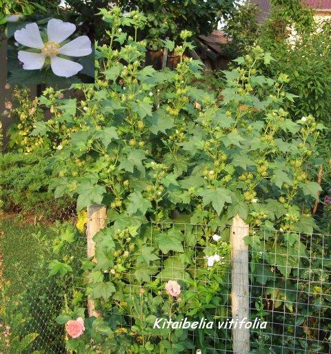 Bepflanzung am zaun sichtschutz seite 2 for Gartengestaltung am zaun