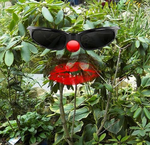 rhododendron jetzt umpflanzen wer hat sowas schonmal. Black Bedroom Furniture Sets. Home Design Ideas