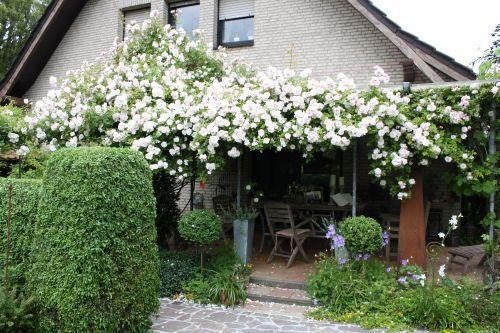 bluhende baume fur den vorgarten – nmmrc, Garten Ideen
