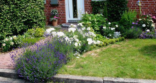 Lavendel mit anderen pflanzen kombinieren salbei l sst for Gartengestaltung lavendel