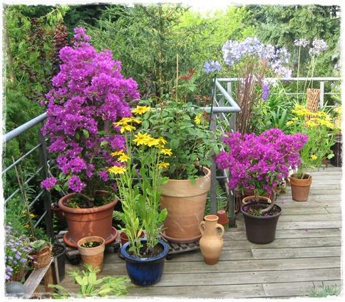pflegeleichte balkonpflanzen | macburada, Hause und Garten
