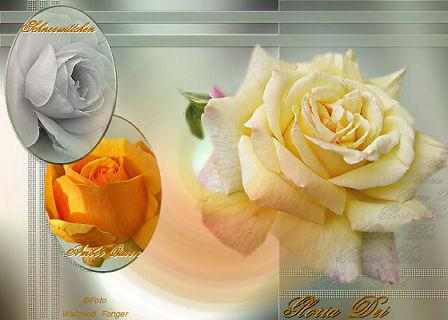 Mein neuer Rosenblog
