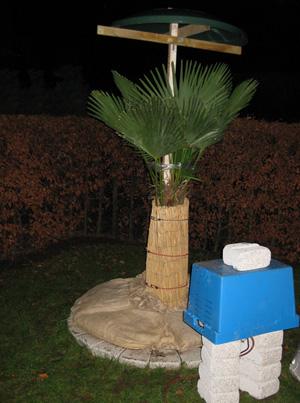 trachycarpus bei welcher temperatur w rmequelle im