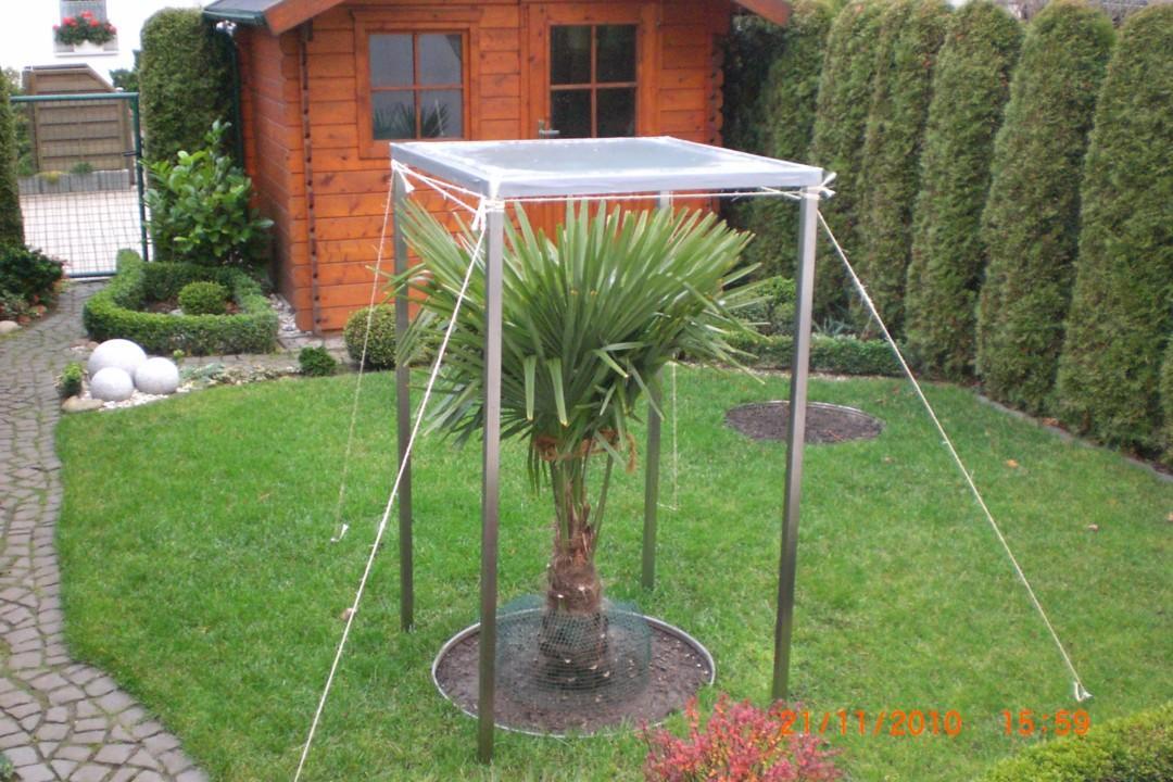 trachyschutz ca 4m winterschutz palmen exotenfans forum. Black Bedroom Furniture Sets. Home Design Ideas