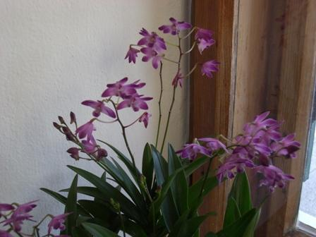die sch nsten orchideen bilder seite 4 foto treff mein sch ner garten online. Black Bedroom Furniture Sets. Home Design Ideas