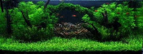 ber 200l besatzfrage 600 liter becken aquarium forum. Black Bedroom Furniture Sets. Home Design Ideas