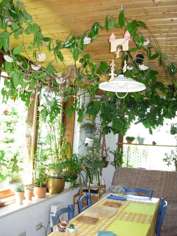 Pflanzen im zimmer wohn design - Zimmerpflanzen bluhend ...