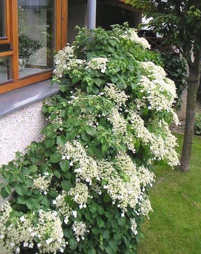 Gartengestaltung Beispiel Tipps Und Bilder ~ Pin Gartengestaltung Beispiele Tipps Und Bilder Picture on Pinterest