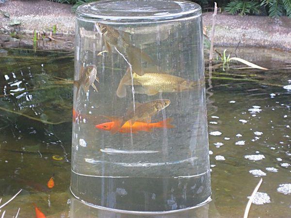Das jahr am gartenteich 2011 for Gartenteich goldfische