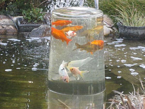 Das jahr am gartenteich 2011 for Gartenteich mit goldfischen
