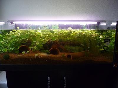die 10 besten aquarium pflanzen