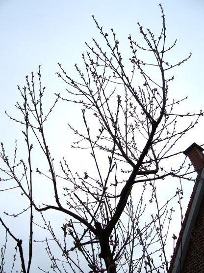 Pfirsichbaum Page 2 Mein Sch Ner Garten Forum