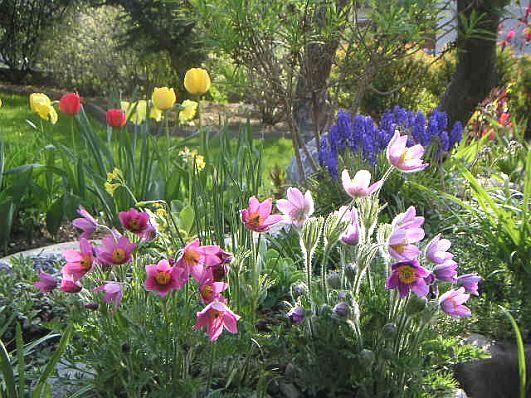 blumen stauden halbschatten stauden im hinterhofgarten 22 stauden f r schatten pflanzen und. Black Bedroom Furniture Sets. Home Design Ideas