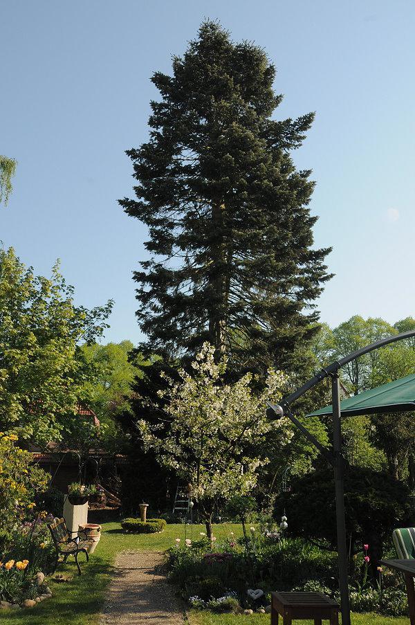 Was Ist Das Für Ein Baum was ist das für ein baum mein schöner garten forum