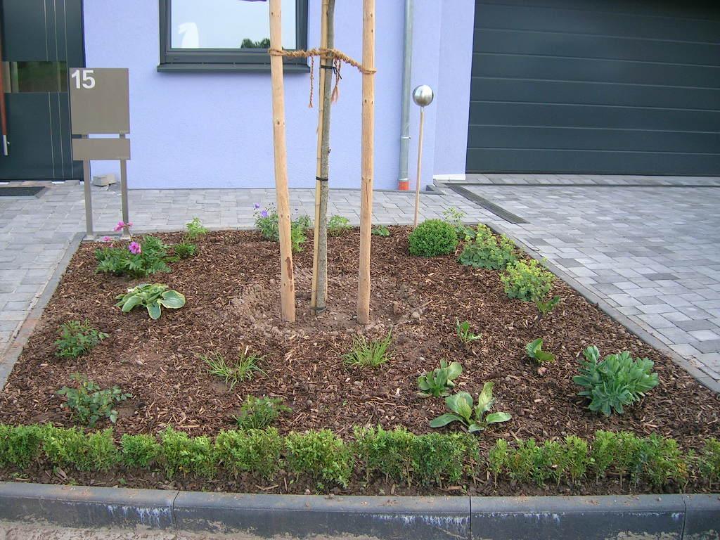Bäume Vorgarten Nordseite etwas langweiliger vorgarten jetzt nicht mehr page 2 mein