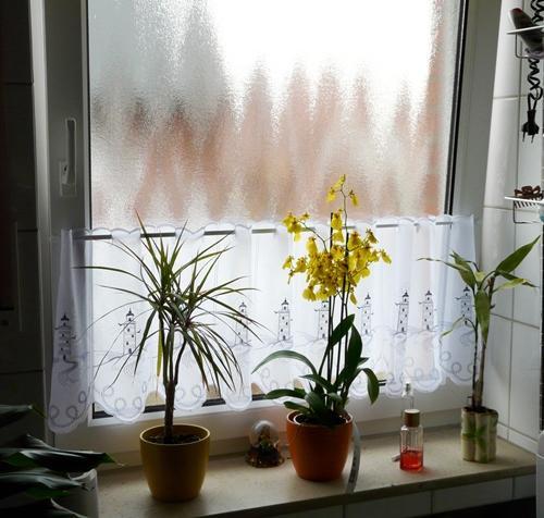 wie pflege ich eine orchidee oncidium richtig mein sch ner garten forum. Black Bedroom Furniture Sets. Home Design Ideas