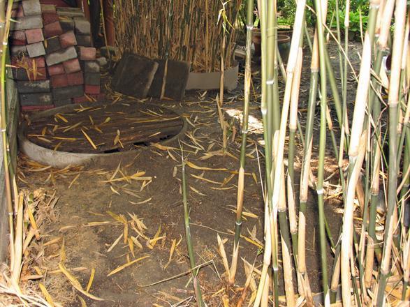 re rhizomsperre vivax bambus 2. Black Bedroom Furniture Sets. Home Design Ideas