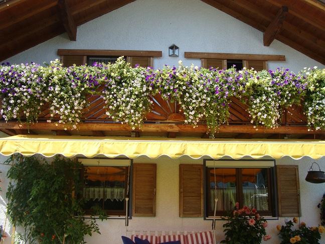 balkonblumen und regen was tun seite 1 gartenpraxis. Black Bedroom Furniture Sets. Home Design Ideas