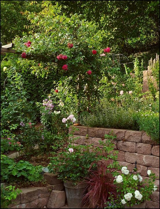 clerotiker clematis und rosens chtige 2011 page 80 mein sch ner garten forum. Black Bedroom Furniture Sets. Home Design Ideas