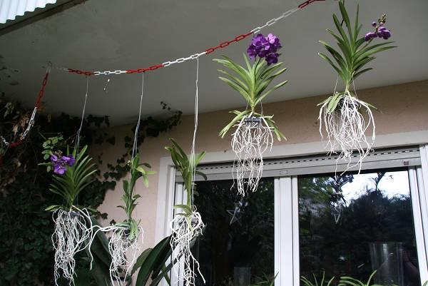 orchideen seite 67. Black Bedroom Furniture Sets. Home Design Ideas
