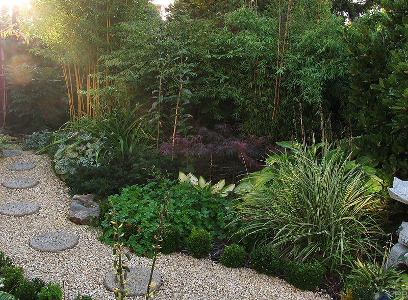 Jade-Bambus schneiden? Pflanztermin? - Mein schöner Garten Forum