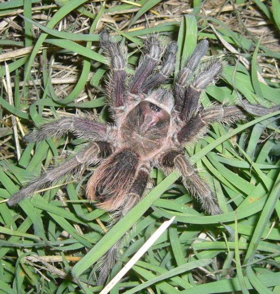 Spinnen Im Garten: Nur Für Leute Ohne Spinnenphobie!