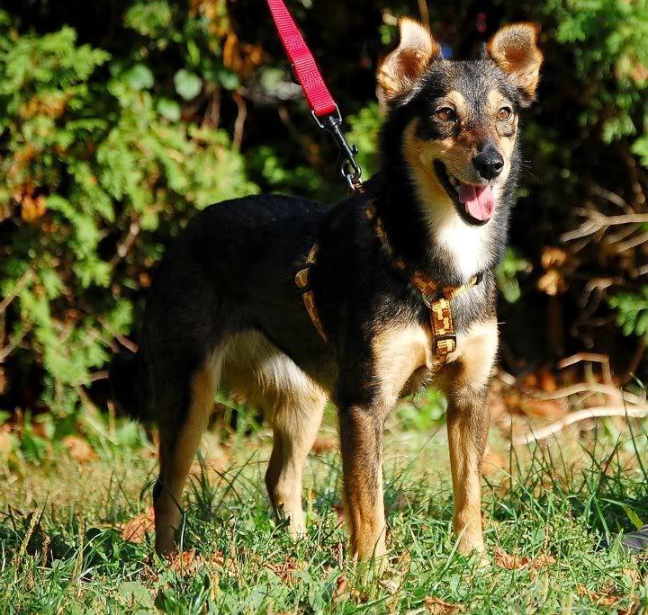 Hund Sucht Sofa | Wuff Forum