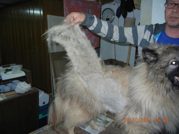 Sully a bien besoin d'un coup de tondeuse, la brosse n'y suffira pas !