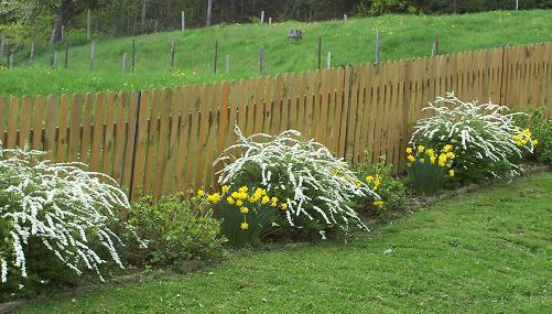 bl hhecke wie klein kann ich sie halten wieviel schneiden vertragen die pflanzen. Black Bedroom Furniture Sets. Home Design Ideas