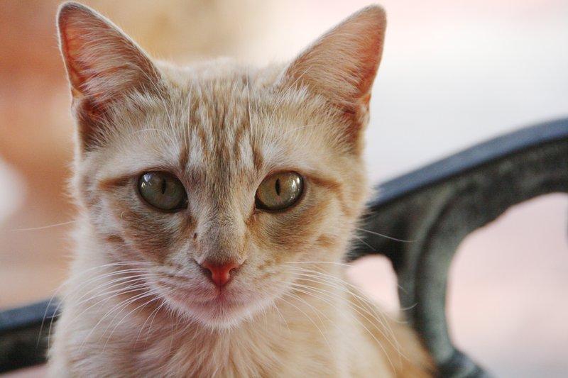 Spottedleaf Warrior Cats Deutsch