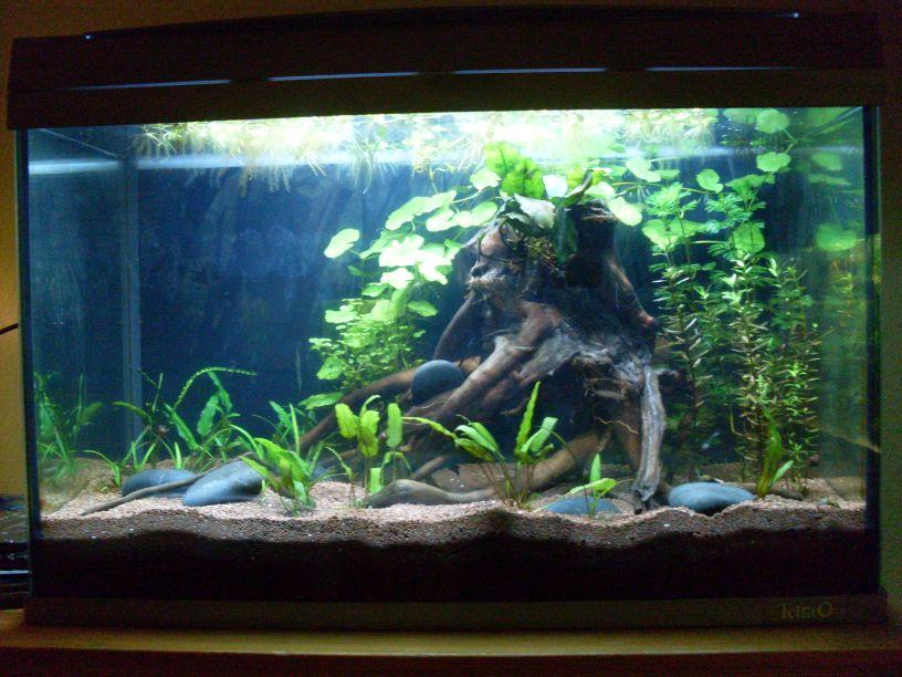 60 liter mein viertes aquarium. Black Bedroom Furniture Sets. Home Design Ideas