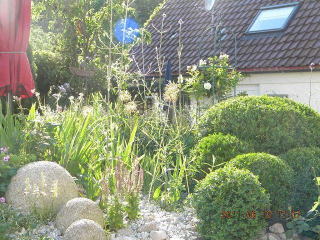 Anlage kiesbeet kiesgarten mein sch ner garten forum - Kiesgarten anlegen ...