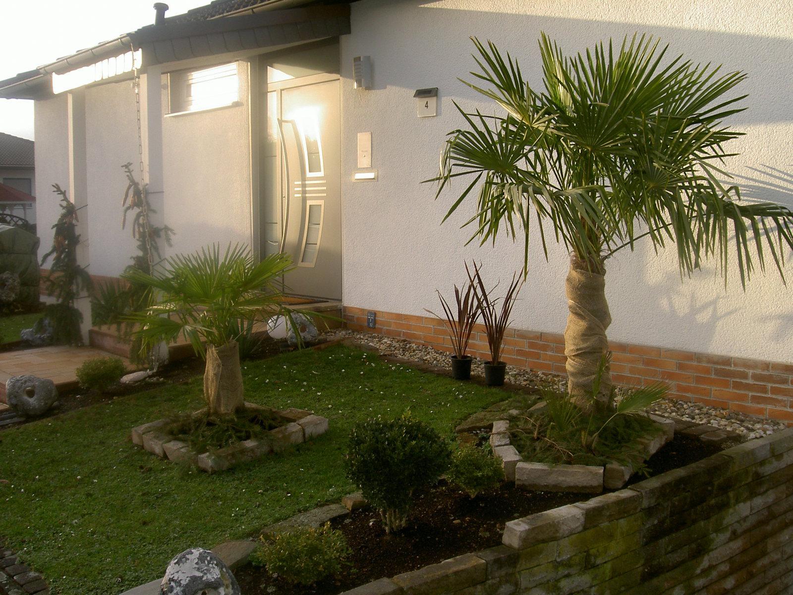 palmen und co soll ich bepflanzen und wenn wie. Black Bedroom Furniture Sets. Home Design Ideas