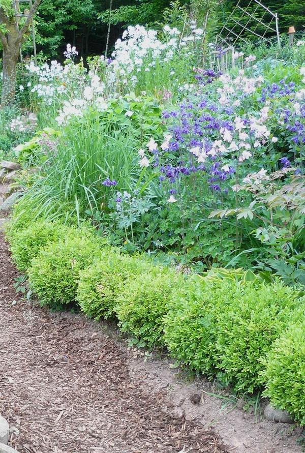 buchs vermehren buchsbaum selbst vermehren gardens front. Black Bedroom Furniture Sets. Home Design Ideas