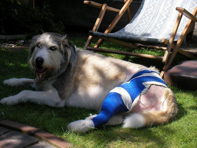 Kreuzbandriss hund nachsorge