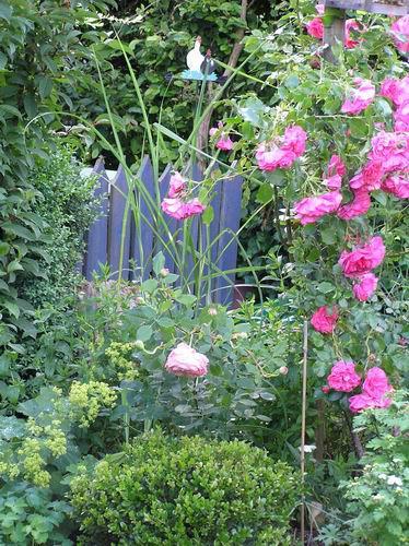 terrassenbeet mit rosen planen seite 3 rund um die. Black Bedroom Furniture Sets. Home Design Ideas