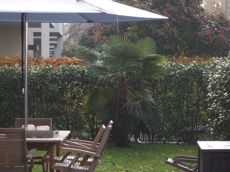 palmen und co palmengalerie rhein main gebiet. Black Bedroom Furniture Sets. Home Design Ideas