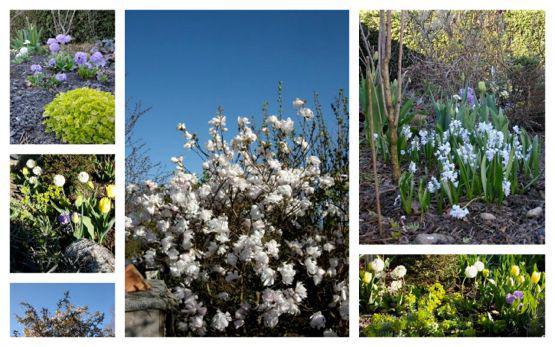 Primavera Wir Paradiesv Gel Im April Mein Sch Ner
