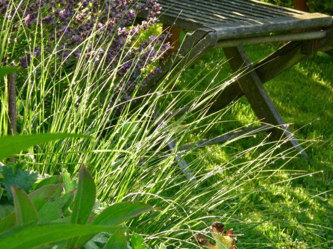 Gras zu rosen mein sch ner garten forum - Garten ohne gras ...